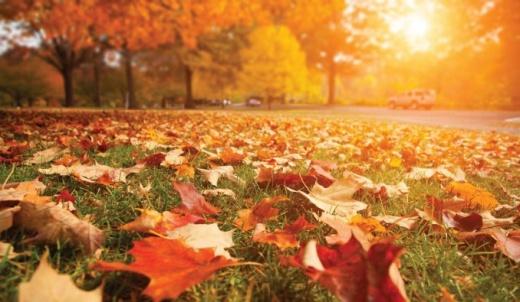 ¿Por qué se adelantó el otoño y comenzó un día antes este año?